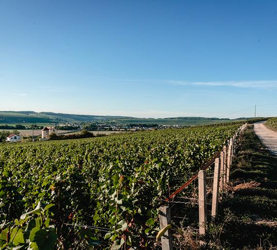 Vue sur le vignoble de Pavant, Champagne Drémont-Marroy
